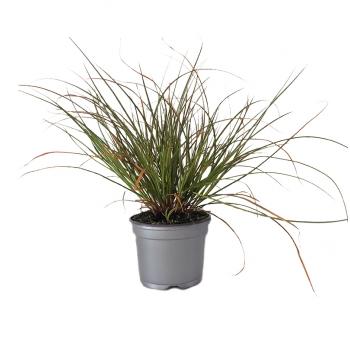 Blog de tendances et d coration lumineuse millumine part 4 for Quelles plantes pour balcon